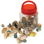 Bucket of Sea Shells